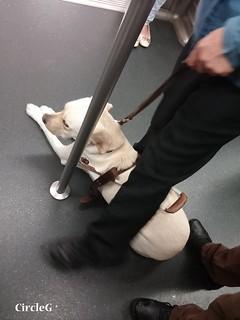 CIRCLEG 不出聲不代表不在意 細節看出你的在意 重康 雞慶 沙田新城市廣場 導盲犬 拉布拉多 小蘋果 曲奇 小露寶 DUSTYKID 塵粒 (18)