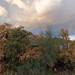 Red Mountain Rainbows