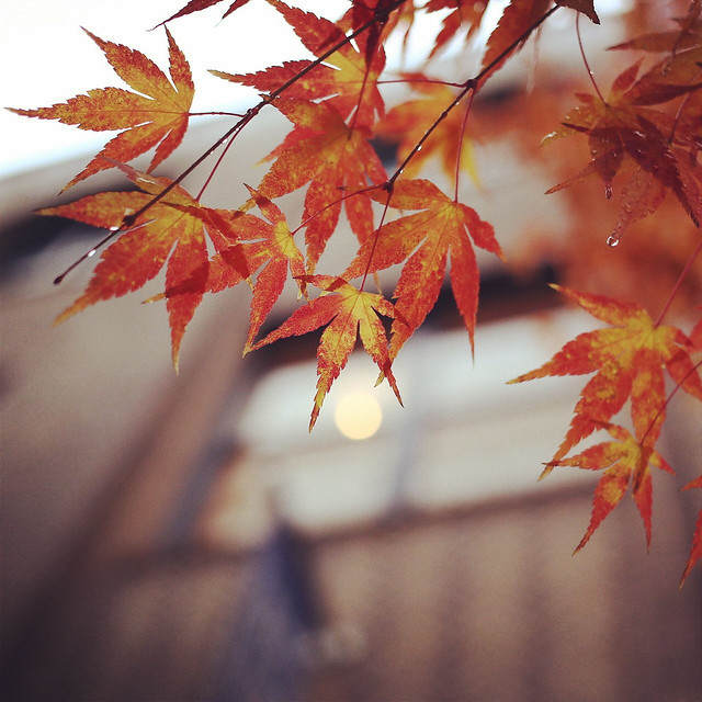 京都,新風館