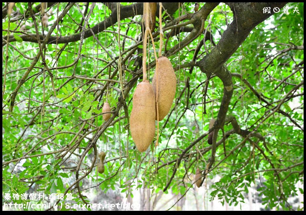 泰雅渡假村-環境篇DSC_0431