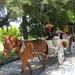 Calandria de época en la Hacienda Villejé, México por haciendavilleje