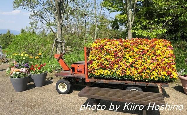 2016.4.30石鹸作り、花トラック