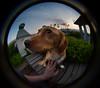 Charlie - Lensbaby Fisheye Portrait I