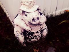 Day 223 - Garden Hog
