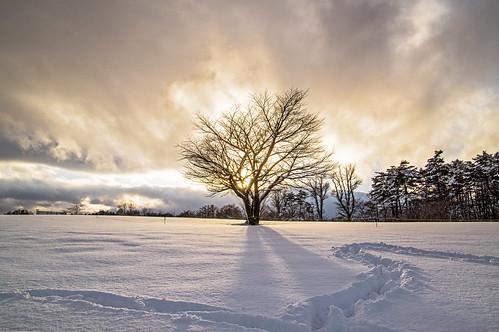 japan landscape pentax 日本 morioka 盛岡 k3 小岩井農場 iwateprefecture koiwaifarm iwatesnowfestival 岩手雪まつり