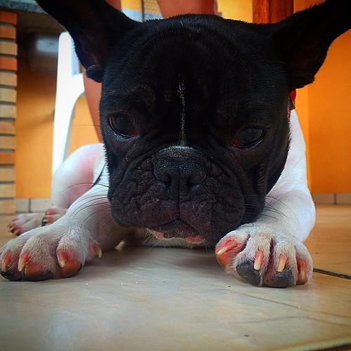 Joaquim!! #Joaquim #Boris #cão #Iperó