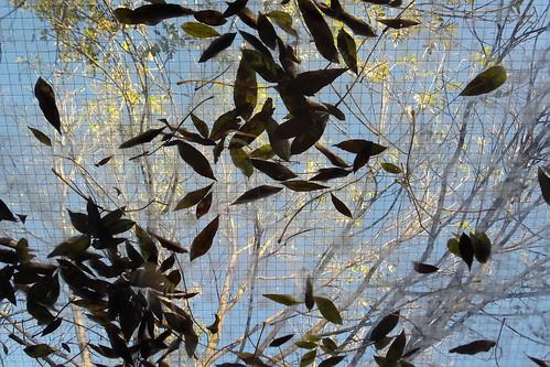 Foglie su e #foglie giù, #autunno