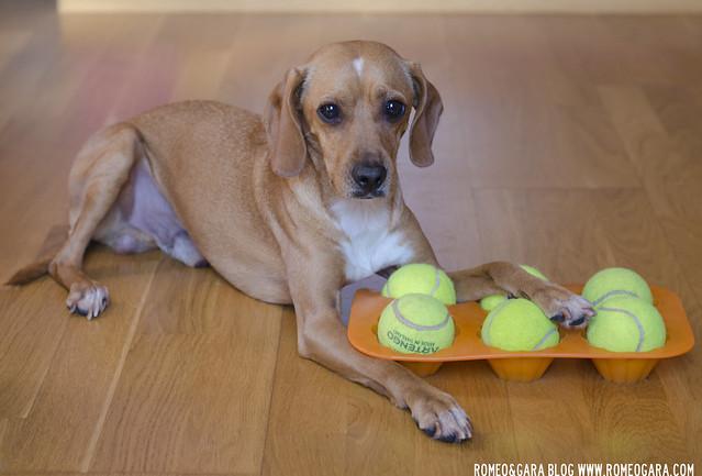 Juego Inteligencia casero para perros