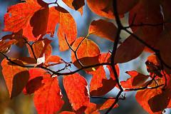 autumn color 2014 - 2