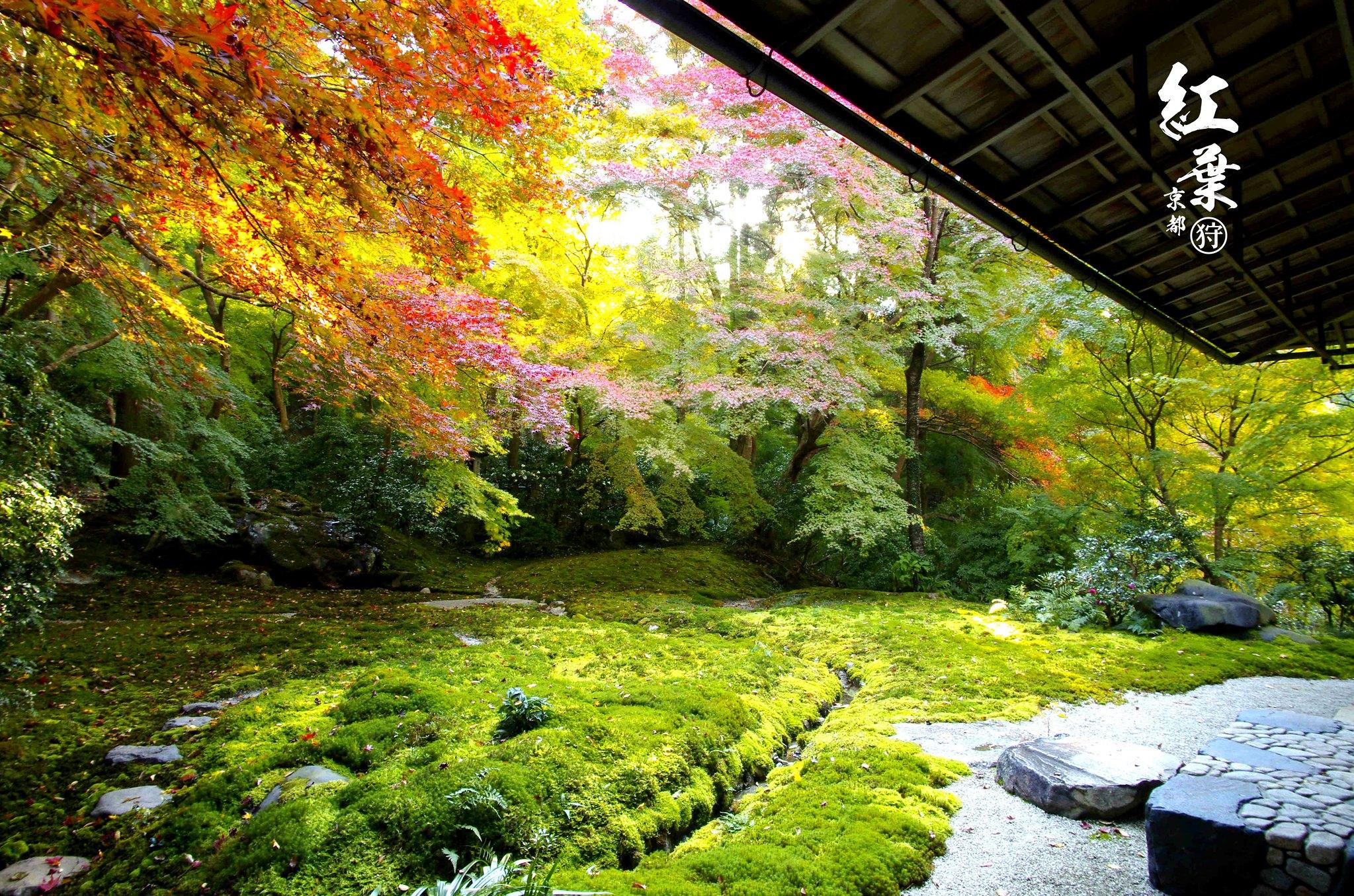 11月の京都紅葉狩り