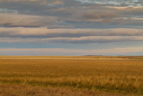 ranch sunset sky cloud canada field evening dusk farm hill alberta prairie grassland waterton