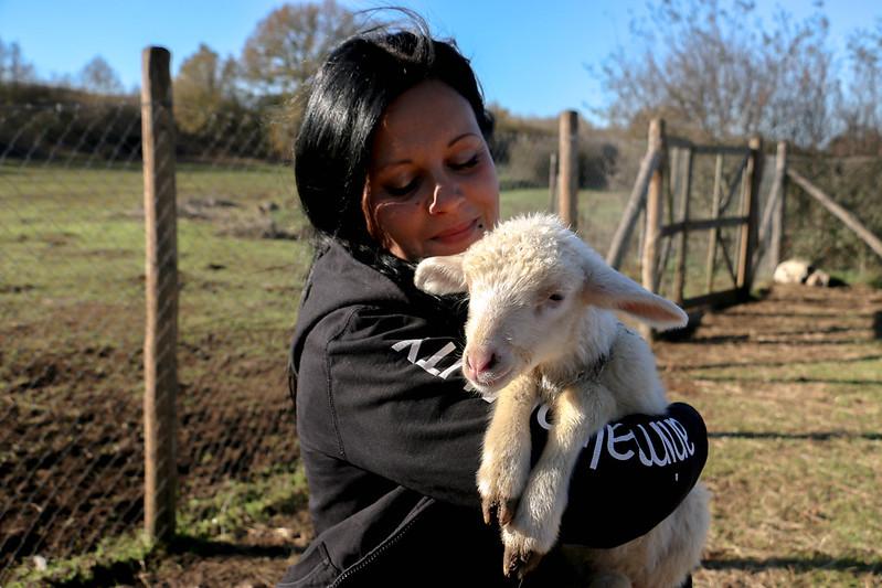 22/12/2014 - Italia - Rescate de dos corderos