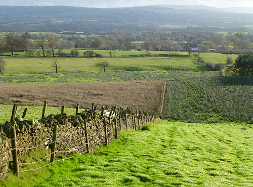 trees houses winter green field fence landscape countryside woods sheep january lancashire valley drystonewall longridge ribblevalley