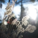 Nature 1/1/2015 Carol Shulman