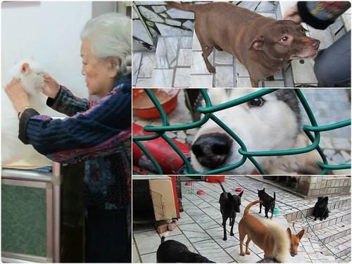 「認養推」新北市新店山區88歲張奶奶有18隻犬27隻貓~因身體越來越差~誠徵會照顧他們一輩子的新家~謝謝您!20150120