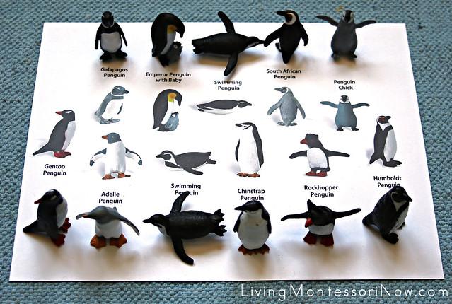 Penguin Matching Layout Using Safari Ltd TOOB Key
