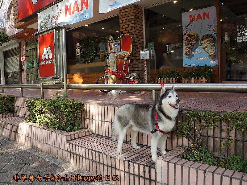 哈士奇Doggy2013陽明山二子坪05