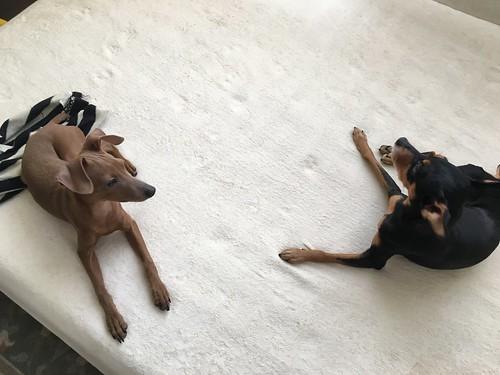 レン&アッシュ