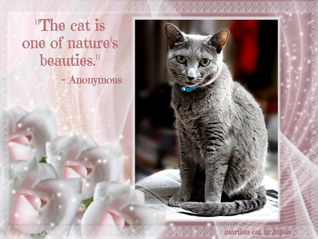 """The cat is one of nature's beauties."""