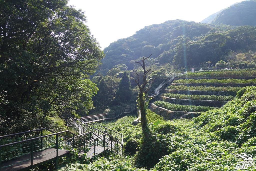 竹子湖青楓步道04