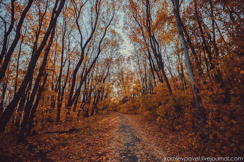Autumn-242