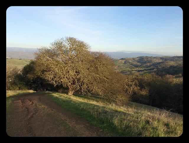 Wintertime oak tree at Calero.