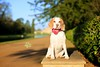 Lucy Beagle | Pet Portrait Photography Wrest Park | Bedfordshire