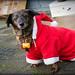 Kerstmarkt Hemelum 13/12/2014