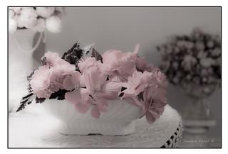 Soft Pink Begonias Still Life