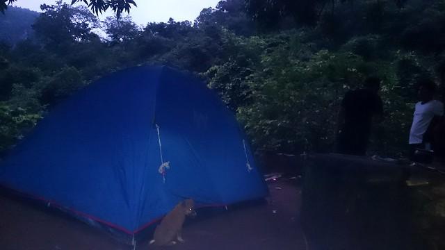 Puppies biting camp