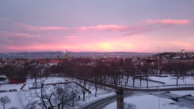Trondheim morning glory
