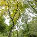 Neuronas - Central Park - Manhattan - New York