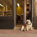guard dog by puppkin