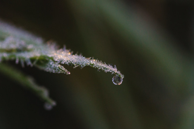 [284] Frozen Drop