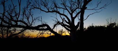 trees sky silhouette australia tasmania bridport