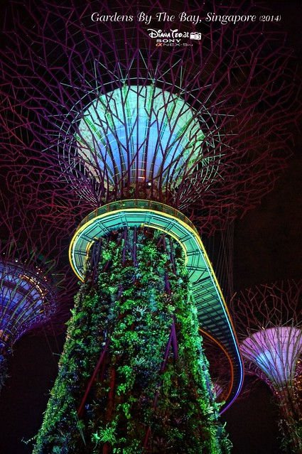 Singapore - Gardens By The Bay 14
