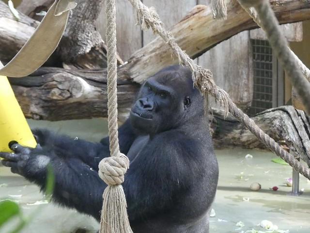 Kito, Zoo Köln