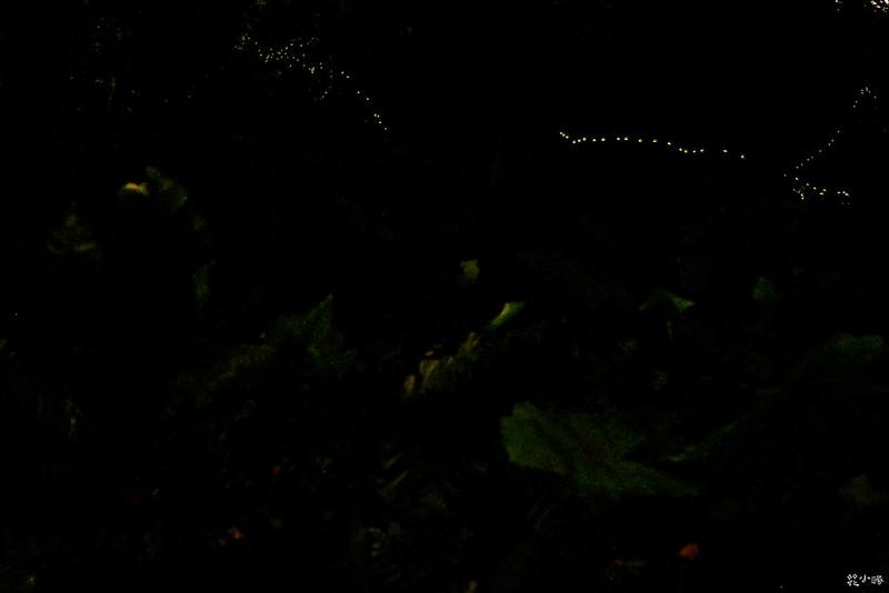 宜蘭景點頭城農場螢火蟲兩天一夜行程推薦 (27)