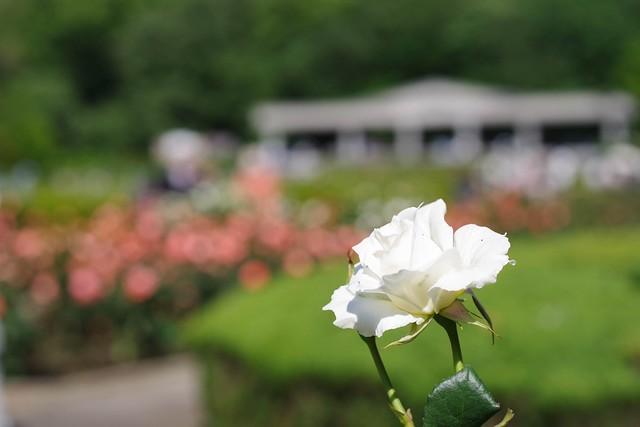 2016/05/04_神代植物公園-17