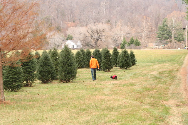 TreeHunting2014 (56)