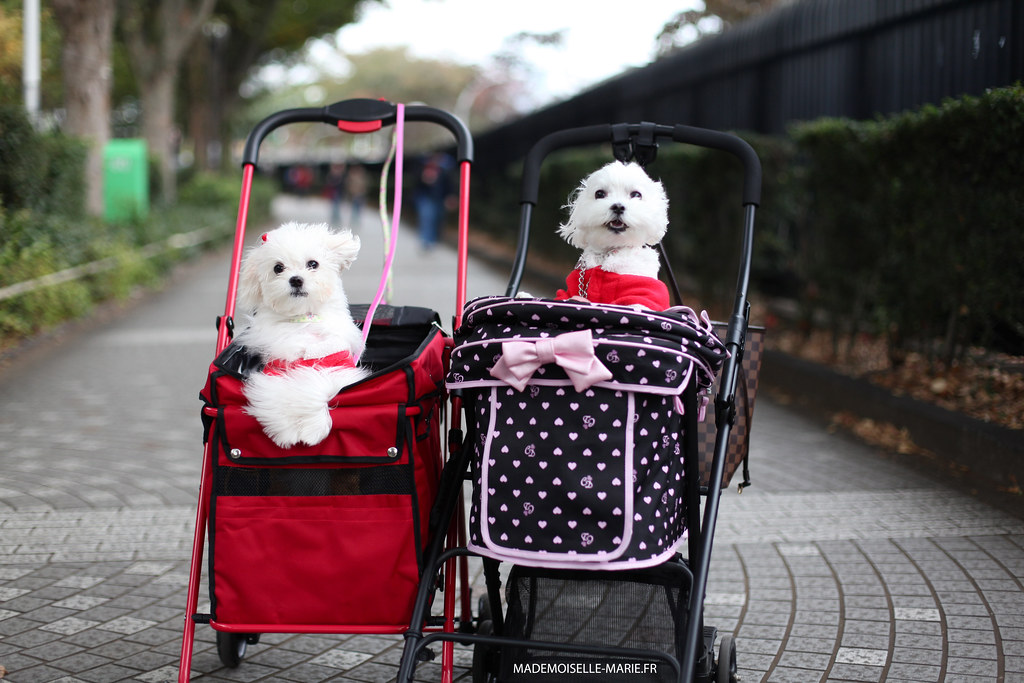 on the street, kawaii dogs, Tokyo, Japan
