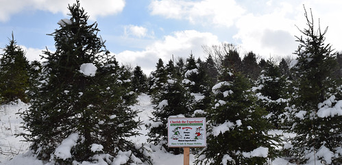 According to the 2012 #AgCensus there were 12,079 farms in the U.S. that harvested a total of 17.3 million cut Christmas Trees. What will the 2014 Census of Horticulture reveal?