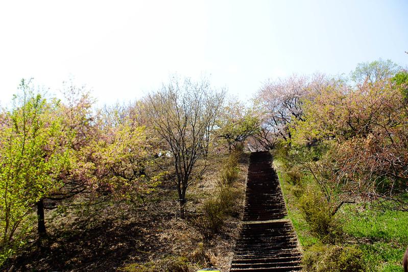 2014-04-19_00169_美の山.jpg