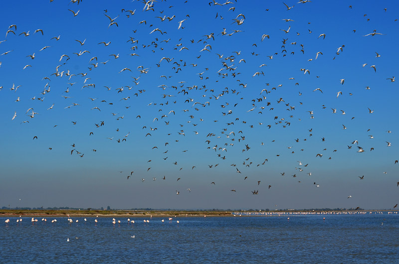 The Birds, Saintes Maries de la Mer, Camargue, France