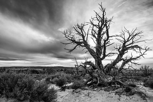 tree utah unitedstates places moab