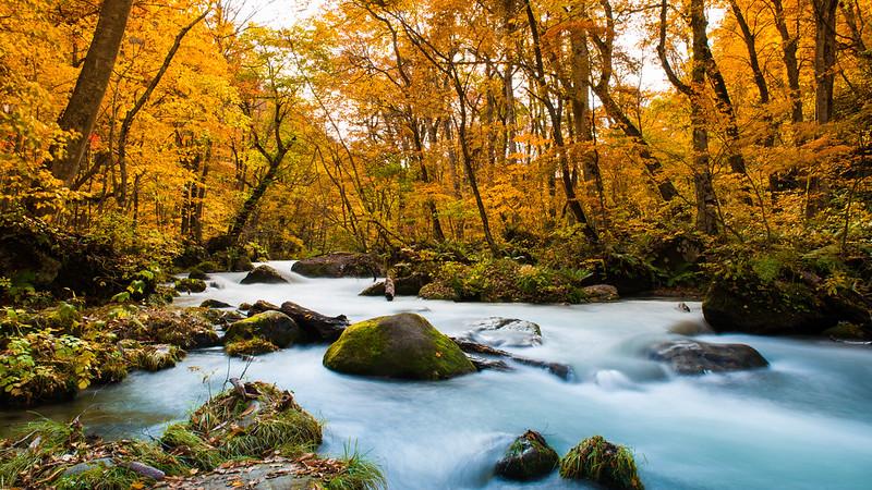 日本 青森–東北之旅–奧入瀨溪流Oirase Mountain Stream(上)