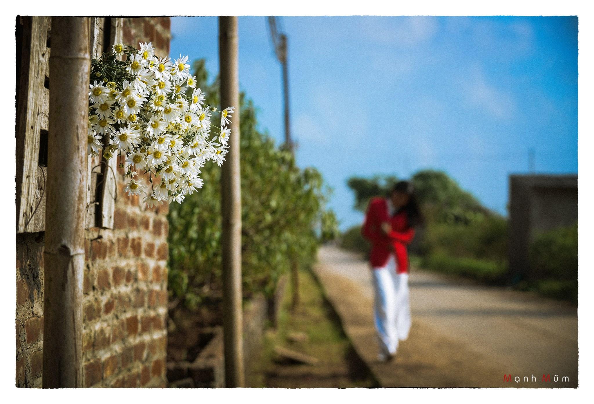 Tinh hoa Áo dài Việt – Cúc họa mi, một đóa tình cho em