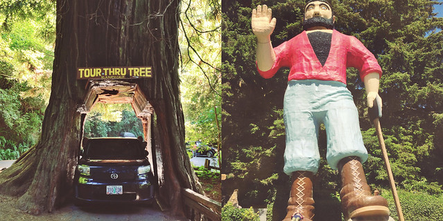 drive thru tree numero uno