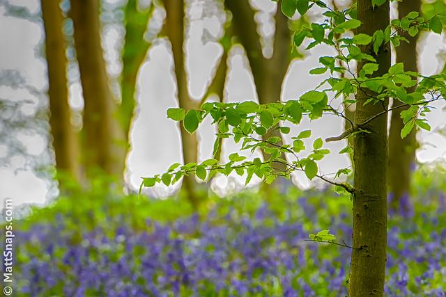 MattSnapsPhotography - Green & Blue