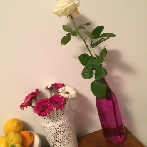 A special white rose:) Una rosa bianca speciale:)